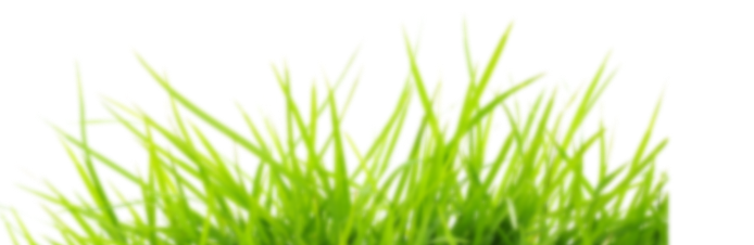 grass-2-1