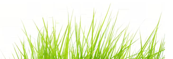 grass-2